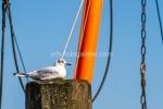 Möwe im Fischereihafen Neuharlingersiel