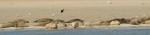 Wattenmeer vor Spiekeroog